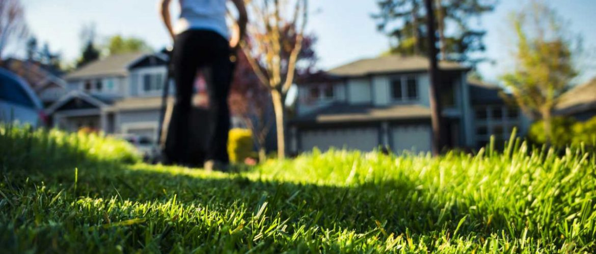 how to mow your grass properly