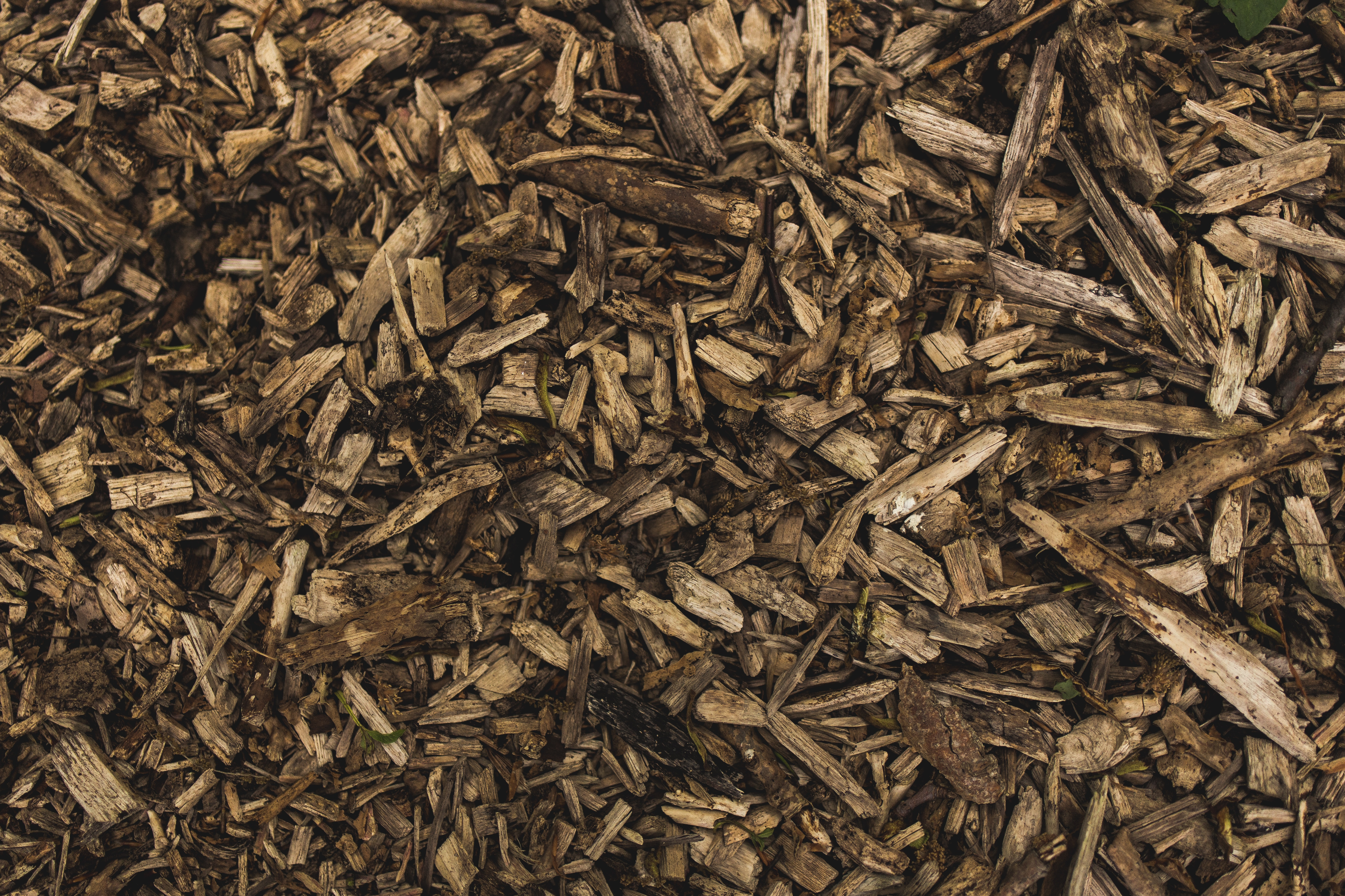 Why You Should Mulch in the Fall