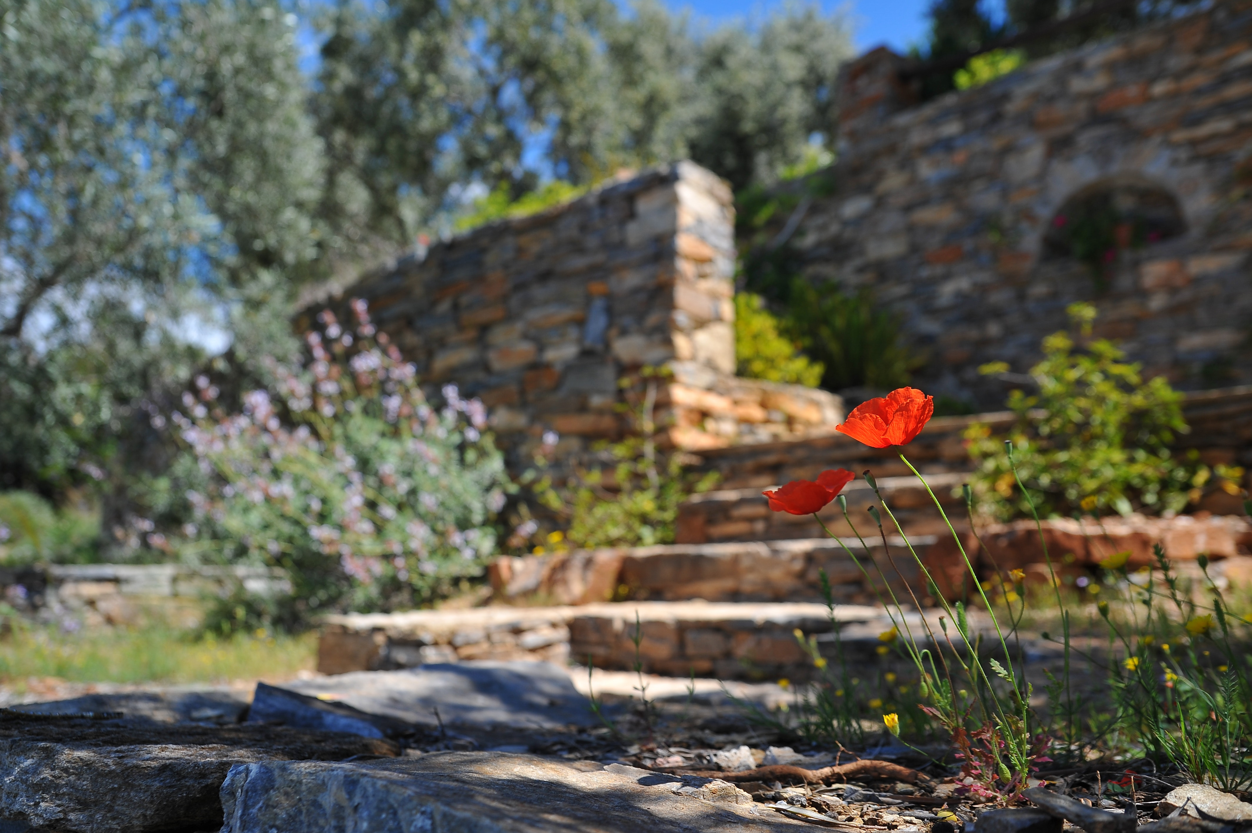 Is Your Yard In Need of Retaining Walls?